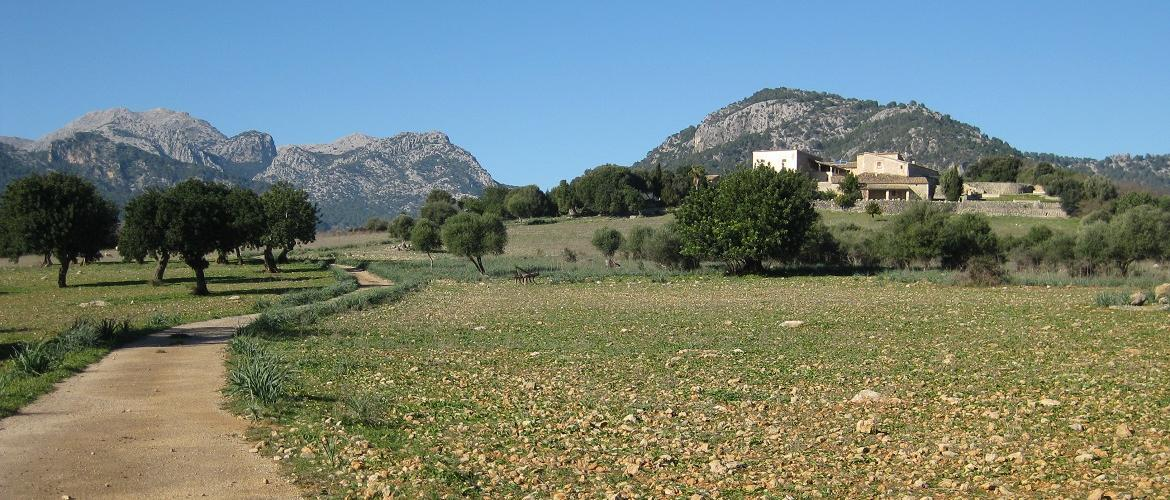 Quiet roads and beautiful scenery for cycling near Campanet, Mallorca. A favourite cycling route for cycling in Mallorca with Mallorca Cycling Holidays, Mallorca Cycling Tours, Cycling in Mallorca, Mallorca Training camps, based in Puerto Pollensa, Mallorca